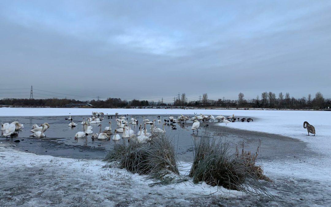 #BoldDailyThought Be A Swan – Owen Mullen